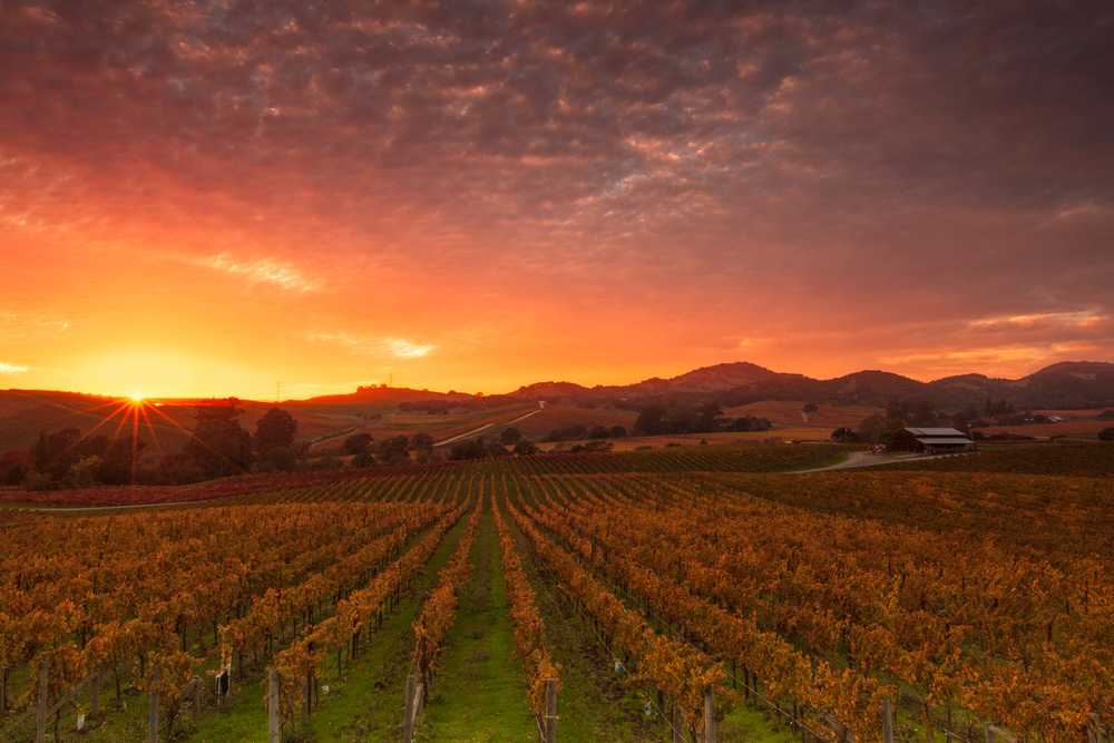 Seasonal Weather Napa Valley in Fall